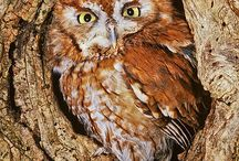 Owl - the bird of wisdome and beauty / The owl in different connections