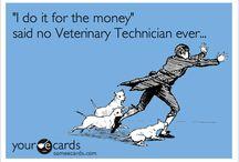 Veterinary Technician / by Haleigh Thrun