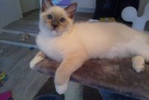 My StarCats Cheek & Elastinen / Pictures about my kittens