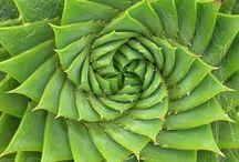 Fay Fabonacci in Nature