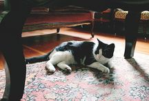Cats at home / beautiful cats in beautiful interiors