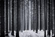 photography / shades of grey
