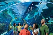 Attractions in Tennessee / by Tennessee Daytripper