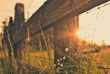 Sunny photo's