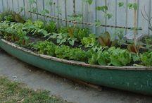 Gardening / by Amy Hepner