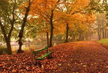 Autumn / The beautiful colors of autumn