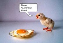 The yolk's on us! / Who doesn't love a good egg pun? Puns, jokes, and other egg humor