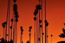 City Of Angels / Our favorite sights and happening in #LosAngeles