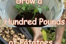 Vegetables & Fruits In Containers