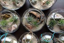 the planter pod