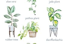 Houseplants / Green up your indoor space with houseplants.