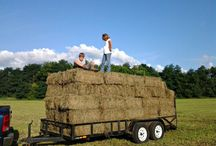 Hay / All about hay:  buying - storing - feeding