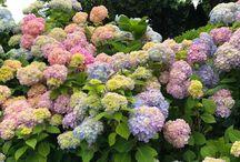 zahrada rastliny