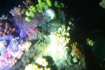 Under Water / Visiting Sea Life
