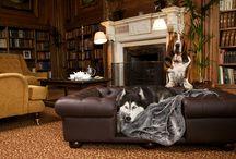 Luxury Dog Beds & Sofas / Scott's of London Luxury Dog Bed/Sofa Range
