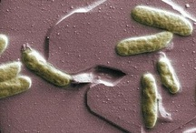 Microbial Fuel Cells (MFC)