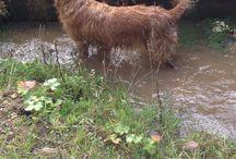 Vores dyr / Dyrene i Tappernøje Minizoo.