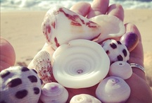 Shells / by Sherie Cardoza