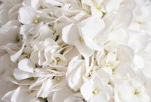 White Weddings / White wedding ideas. From floral and reception, to bridesmaid dresses and wedding invitations!