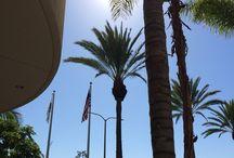 2014 09 ロサンゼルス出張 / CARMAXサミット