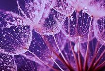 Bloemen en Planten Fotobehang / Laat u verrassen door de kleuren en mogelijkheden van het Bloemen Fotobehang van Royaal Fotobehang en creëer een persoonlijke sfeer in uw woning of kantoor.