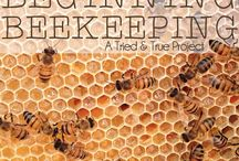 Honey Honey / How great are bees?