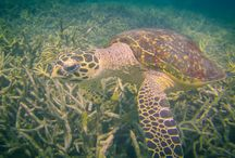 Diving Around the world