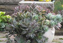 Enchanted Garden Ideas / Enchanted Garden Ideas