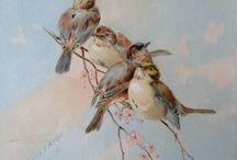 Kuşlar bahider