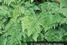 Paleo Plants / Eating like primitive man is popular diet plan these days -- how about adding some prehistoric plants to your garden, too? (We're including plant types that originated in both the Paleozoic and Mesozoic eras.)