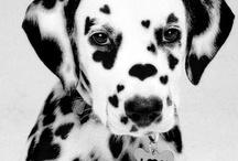 pets / by Madison Richmond