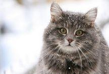 Cats / by Violasboutique