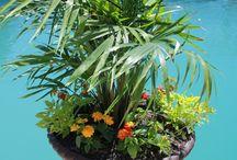 Outdoor Decor/Gardening