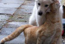 cat &dog