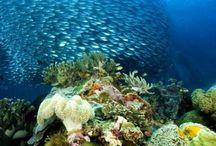 minunatii marine