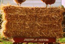 Hobby Farm Inspiration / by Robyn Guptill