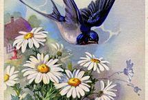 Vintage fugle