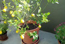 Garden: Indoor Gardens & Houseplants