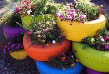 Tuin,bloem en plant
