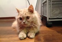 Cats / Beautiful and funny cats