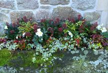 Containers for winter colour