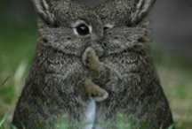 For the love of bunnies...