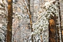 Winter in the Maine Woods