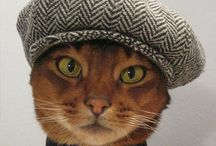 Animal Love / Cute Animals / by Lisa Watson