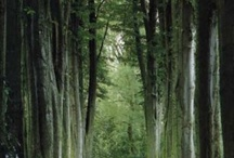 Trees, Woods and Forests / by Lou