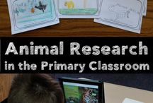 Animal research project
