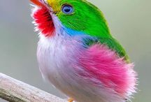 Colorful animals