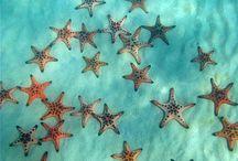 Αστερίες/starfish