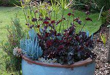 puutarharuukut,container garden