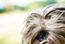 Feel great with a briard